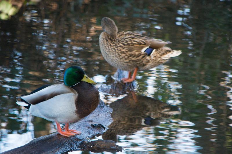 Pond Photo Shoot_Jan-1-2