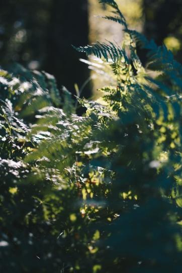 Redwoods-3